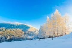 Winterlandschaft von Bäumen und von Bergen stockfotografie