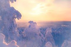 Winterlandschaft von Sotkamo, Finnland stockfotografie