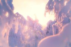 Winterlandschaft von Sotkamo, Finnland stockfotos