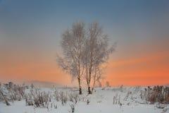 Winterlandschaft von zwei Bäumen auf einem schneebedeckten Gebiet bei Sonnenuntergang Stockbilder