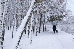 Winterlandschaftforestseeschnee der gezierten Kiefer Naturweihnachtskaltes Weihnachten neuen Jahres stockfotos