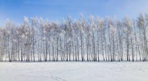 Winterlandschaftsbäume im Schnee Stockfoto