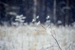 Winterlandschaftsbäume und trockenes Gras im Wald bedeckt mit Frost nahe dem Feld das schöne Licht der Einstellung Stockbild