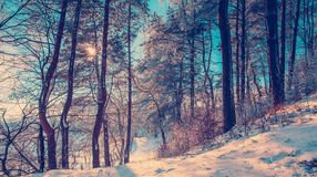 Winterlandschaftsglühen Stockfoto