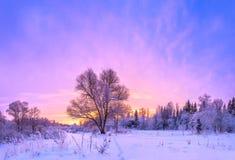 Winterlandschaftspanorama mit Sonnenuntergang und dem Wald Stockfoto