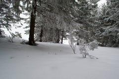 Winterlandschaftstannen und -büsche im Schnee Lizenzfreies Stockfoto
