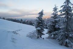 Winterlandschaftstannen und -büsche im Schnee stockbilder
