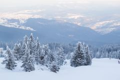 Winterlandschaftstannen und -büsche im Schnee stockfoto