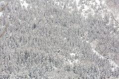 Winterlandschaftswald stockfotografie