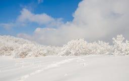 Winterlandschaftsweißer Schnee des Berges in Korea Stockfotos