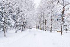 Winterlandschaftsweißer Schnee des Berges in Korea Lizenzfreies Stockbild