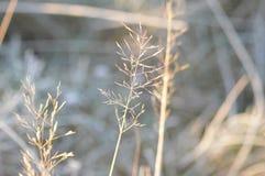 Winterlaub Lizenzfreie Stockbilder