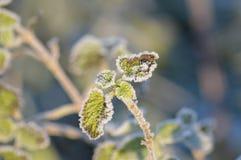 Winterlaub Stockfotografie