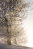 Winterleuchte lizenzfreies stockbild