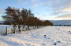 Winterliche Szene Stockfoto