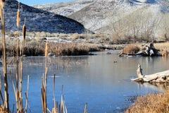 Winterliche Szene an der McCarran-Konserve Stockbild
