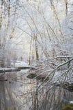 Winterliche Waldlandschaft Lizenzfreies Stockbild