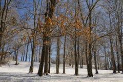 Winterlicher Abhang lizenzfreies stockfoto