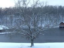 Winterlicher Baum Stockfotos