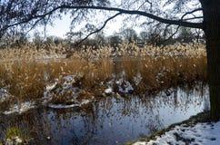 Winterlicher ländlicher Teich Stockfoto
