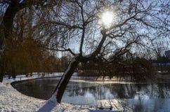 Winterlicher ländlicher Teich Stockfotos