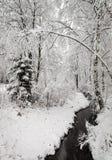 Winterlicher Nebenfluss im Wald Stockbild