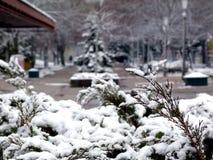 Winterlicher Park mit Schnee bedeckte Sträuche und Evergreens stockbilder