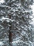Winterlicher Schnee Lizenzfreies Stockbild