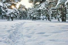 Winterlicher Wald Stockbilder