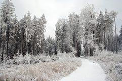Winterlicher Wald Stockbild
