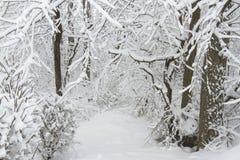 Winterlicher Wald Stockfoto