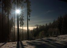 Winterlicher Wald, Lizenzfreie Stockfotos
