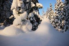 Winterlicher Wald Lizenzfreie Stockbilder