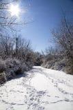 Winterlicher Weg mit Sun Stockfotos