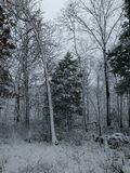 Winterliches Holz Stockfotografie
