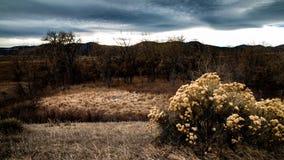 Winterliches rabbitbush und Cattails stockfotografie
