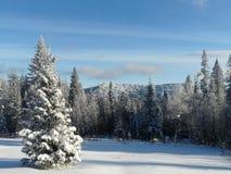 Winterlichtung Stockfoto