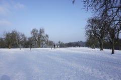 Winterly äng royaltyfri fotografi