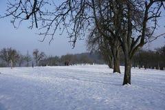 Winterly äng arkivbilder