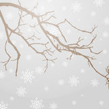 Winterly branch Royalty Free Stock Image