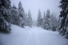 Winterly forest Royalty Free Stock Photography