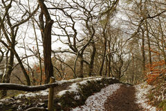 Winterly forest Royalty Free Stock Photo