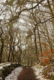 Winterly forest Royalty Free Stock Image