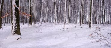 Winterly forestal  landscape Stock Photography
