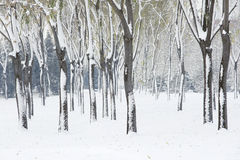 Winterly trees Stock Photos