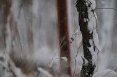Wintermärchen - Schnee regnet Stockfotografie