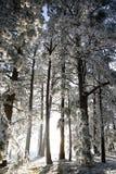 Wintermärchenland Stockfotos
