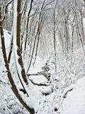 Wintermärchenland Lizenzfreies Stockbild