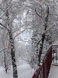 Wintermärchenland, unser schneebedeckter Garten in Serbien, Fruska Gora Lizenzfreie Stockfotografie