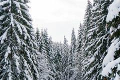 Wintermärchenlandlandschaft mit schneebedeckten Tannenwipfeln Lizenzfreie Stockfotos